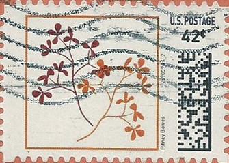 P42HSYflower001