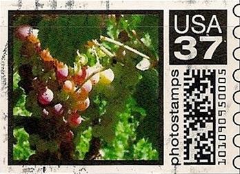 SB37a4Yflower001