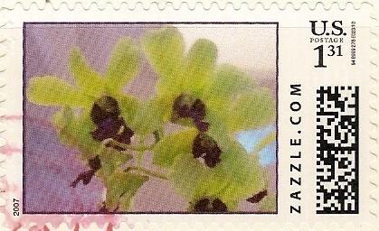 Z131HM07flower001