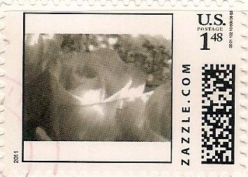 Z148HS11flower001
