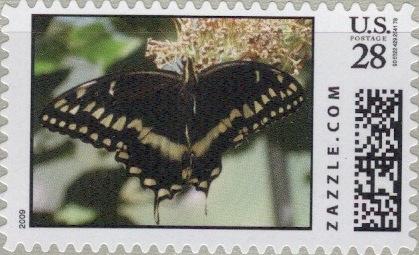 Z28HM09butterfly001