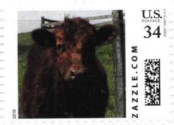 Z34HS16cow001