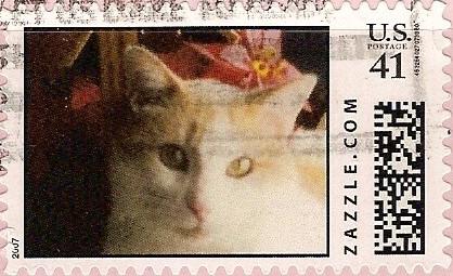 Z41HM07cat002