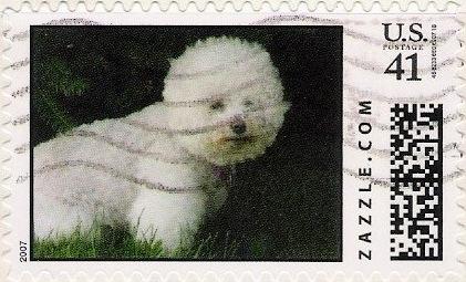 Z41HM07dog011