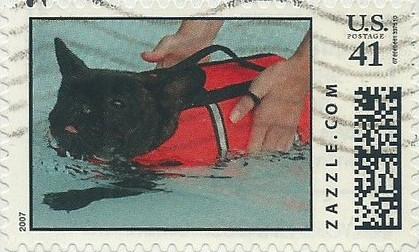 Z41HM07dog014