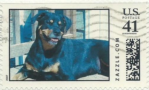 Z41HM07dog016