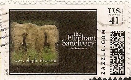 Z41HM07elephant001