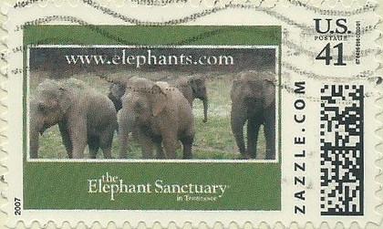 Z41HM07elephant002
