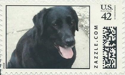 Z42HM08dog012