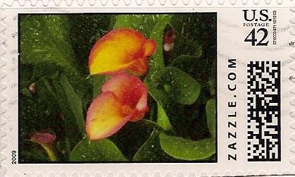 Z42HM09flower004