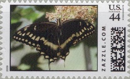 Z44HM09butterfly002