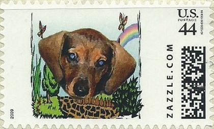 Z44HM09dog008