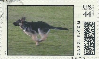 Z44HM09dog009