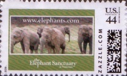 Z44HM09elephant001
