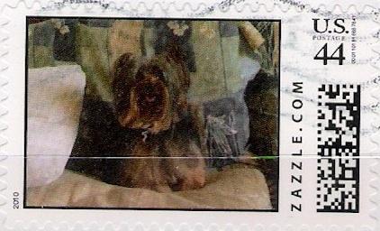 Z44HM10dog002