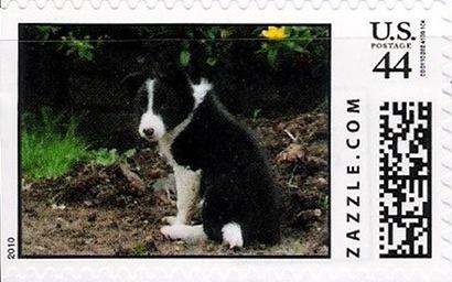 Z44HM10dog010