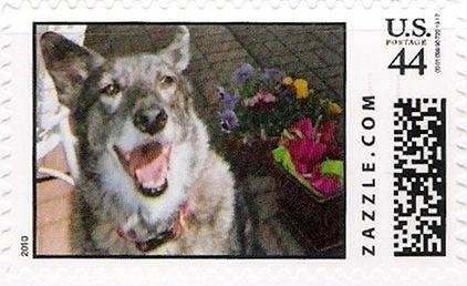 Z44HM10dog011