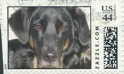 Z44HM10dog014
