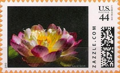 Z44HM10flower001