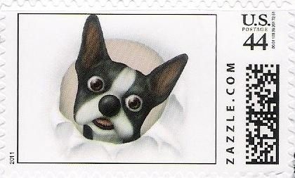 Z44HM11dog005