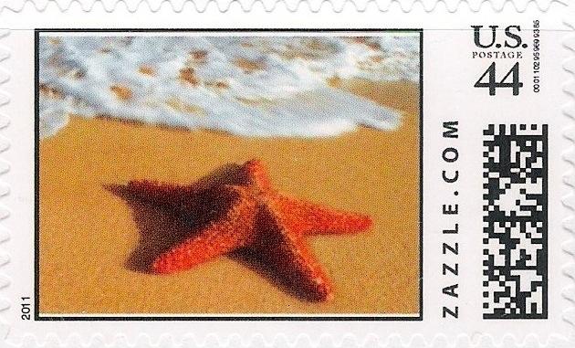 Z44HM11starfish001