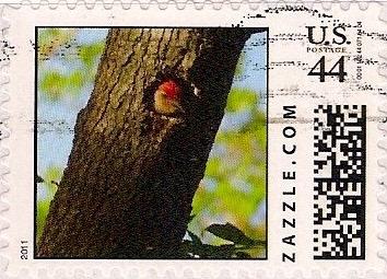 Z44HS11bird001