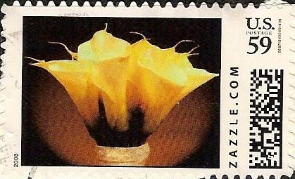 Z59HM08flower001